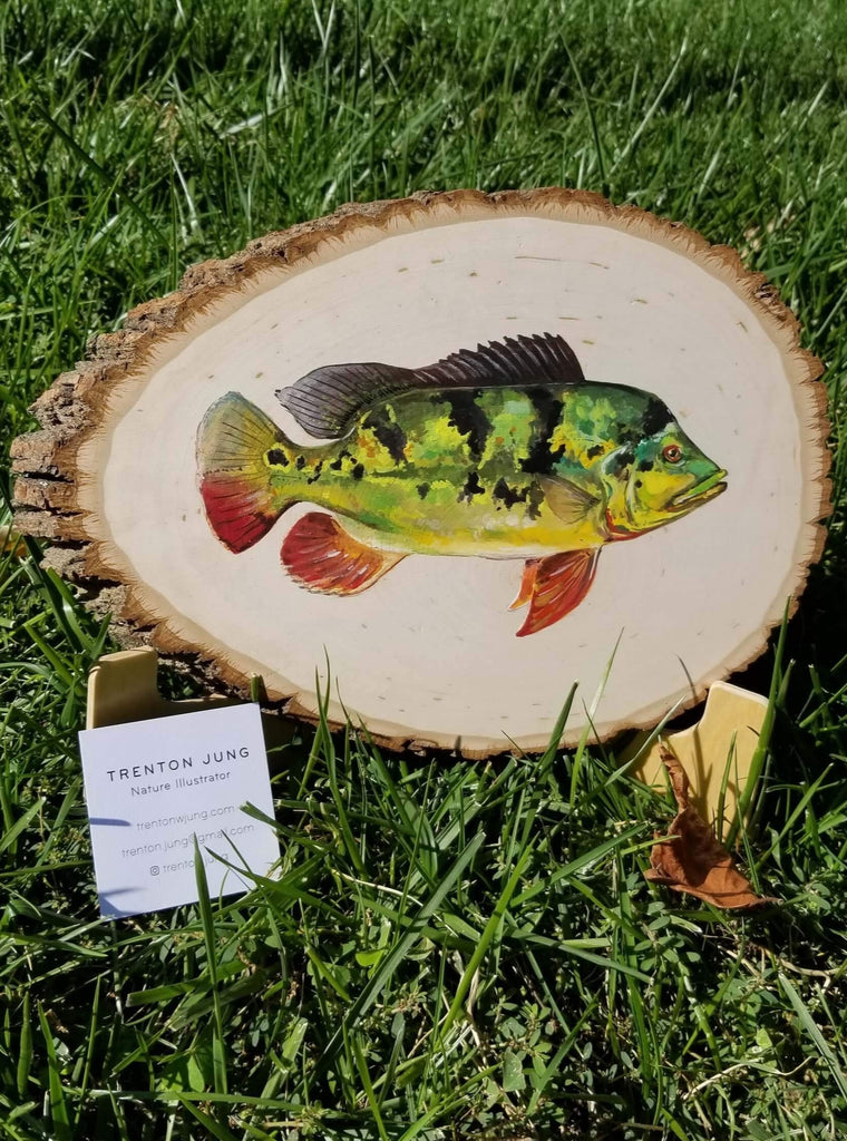 Fish paintings on Basswood Panel