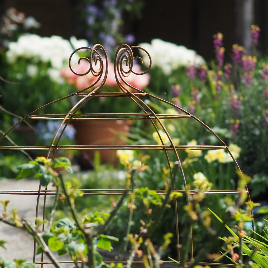 Plant supports at RHS Rosemoor gardens - Grande Plant Belles
