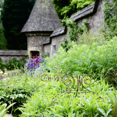 Plant Belles at Knightshayes Court NT Gardens