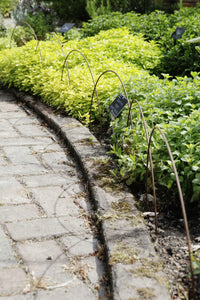 Plant supports, rusty edging, fencing - Small Edging Hoops - seen here at RHS Rosemoor