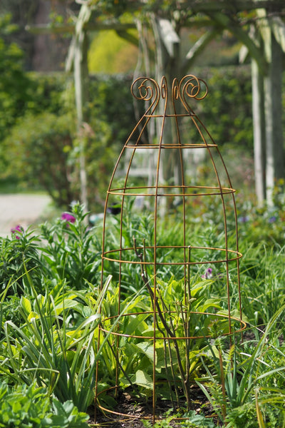 Obelisks and grow-through plant supports. Also great for training roses. At RHS Rosemoor & Wisley