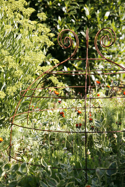 Grow through plant supports, rusty wire frames - George Belle - Great for floppy perennials like Sedum, Phlox, Aster, Penstomon,