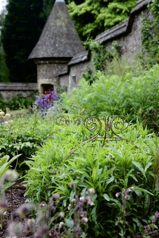 Grow through plant supports, rusty wire frames - George Belle - Great for floppy herbaceous perennials, seen here at Knightshayes Court