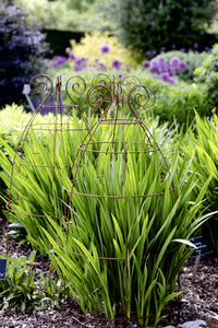 Grow through plant supports, rusty wire frames - Sidney Belle - Great for floppy perennials like Crocosmia, Dahlias, Delphiniums