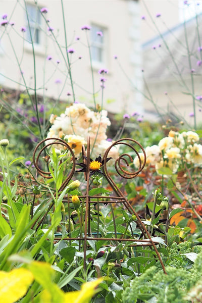Grow through plant supports, rusty wire frames - George Belle - Great for floppy perennials, seen here at Saltram