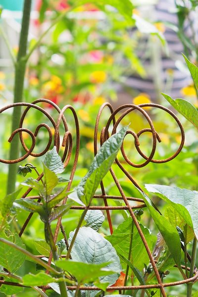 Grow through plant supports, rusty wire frames - Sidney Belle - Great for floppy perennials like Dahlias, Delphiniums, Campanulas