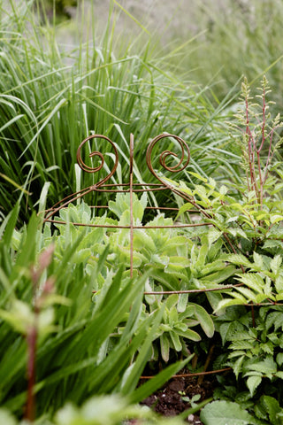 Grow through plant supports, rusty wire frames - Gertrude Belle - Great for floppy perennials Sedums, Peonies, Oriental Poppies, Geraniums