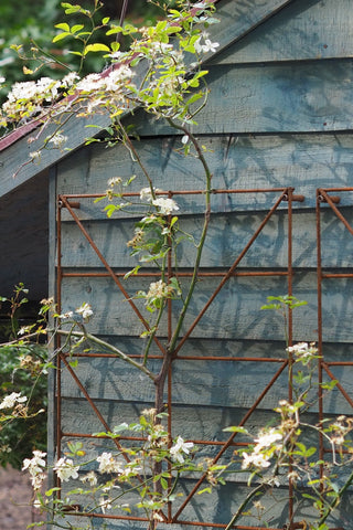 Trellis Panels, rusty plant support - Climbing Squares - for training climbing plants. Photo RHS Cheslea