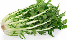 Load image into Gallery viewer, Puntarelle Chicory / Puntarelle di Cicoria ~850-1000gr