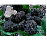Black Autumn Truffle (Tuber Uncinatum Chatin) 100g    (In STOCK From MONDAY the 25th)