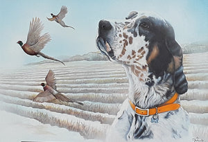 English Setter Limited Edition Print