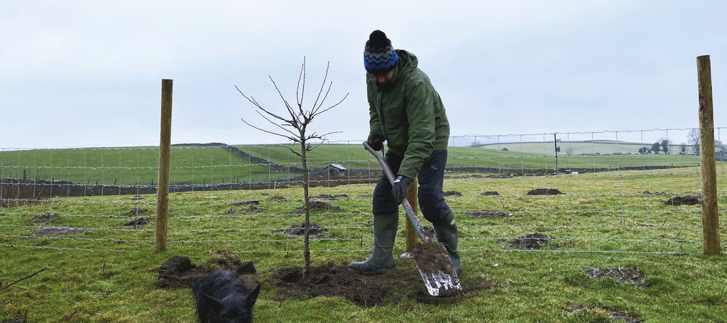 tree-planting-essentials