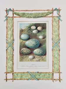 Nest & Eggs antique print with hand-painted garland border