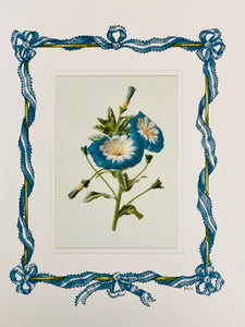Morning Glory antique print with hand-painted ribbon border.