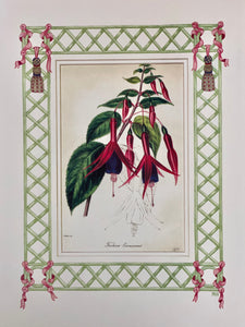 Fuschia antique print with hand-painted lattice border.