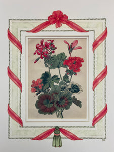 Geranium antique print with hand-painted ribbon border