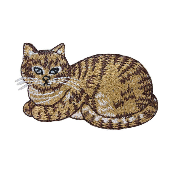 ID 3620 Tabby Cat Patch Striped Domestic Pet Kitten Embroidered Iron On Applique