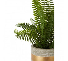 Load image into Gallery viewer, Boston Fern Succulent