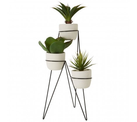 Set Of 3 Succulents With Metal Stand