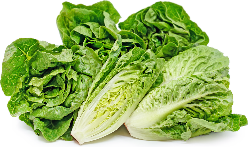 Gem Lettuce - Twin Pack