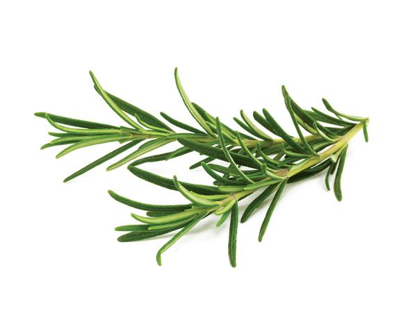 Herb Rosemary - LARGE BUNCH