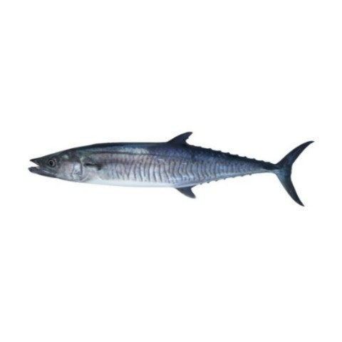 Fresh Spanish Mackarel 500g