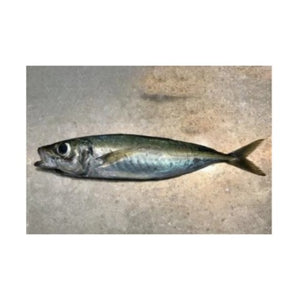 Fresh Yellow Tail Mackarel 500g