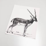 illustrated black and white antelope pattern on white background Removable Peel and stick wallpaper sample size