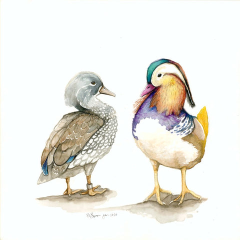 Fine Art Greeting Card of Pair of Mallard Ducks