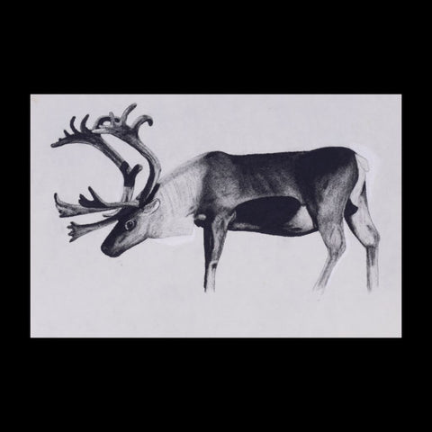 Caribou Original Charcoal & Pencil Sketch