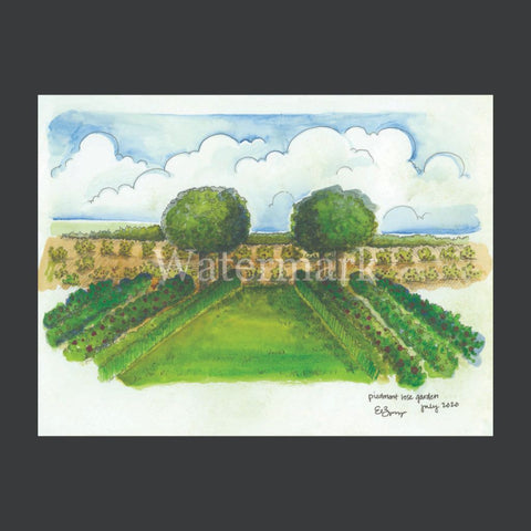 Piedmont Rose Garden Original Watercolor