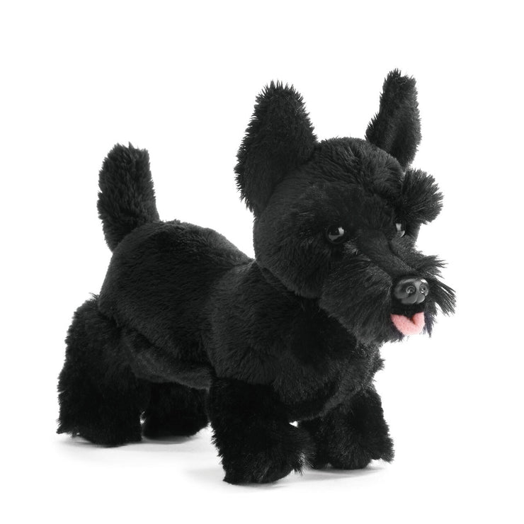 Scottish Terrier Pup