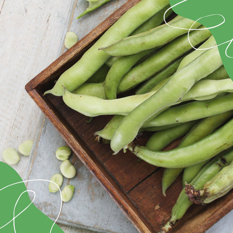 How to prepare and cook broad beans