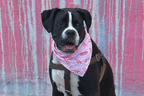 all american pet photo day