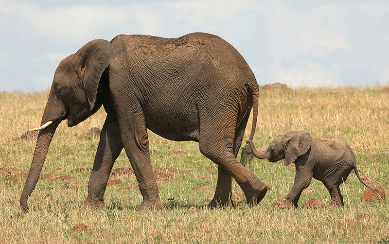 motherbabyelephant