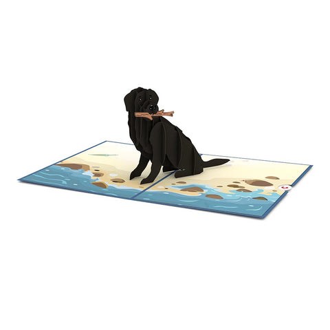Black Lab greeting card -  Lovepop
