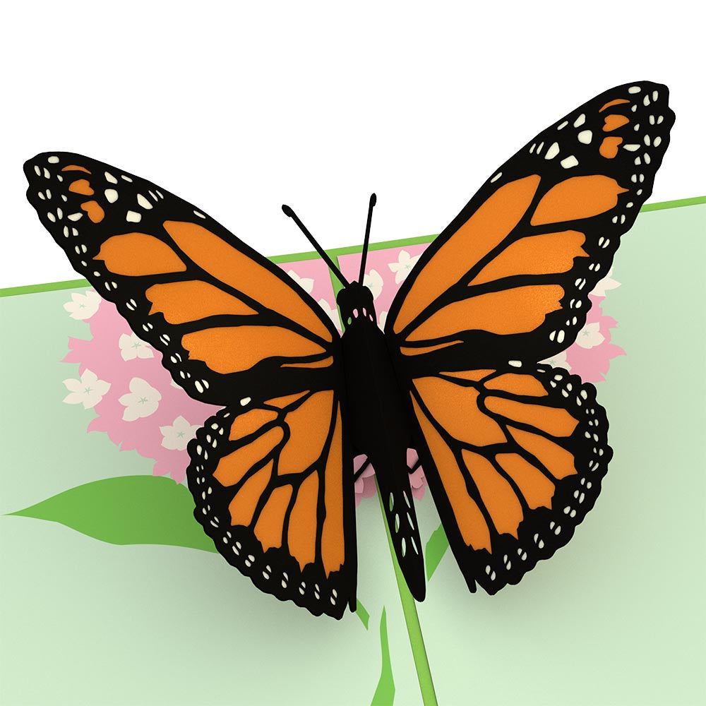 What does a butterfly look like