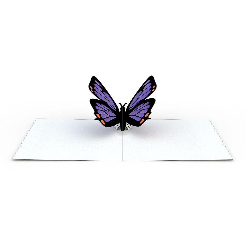 Butterfly (Assorted 4 Pack)             pop up card