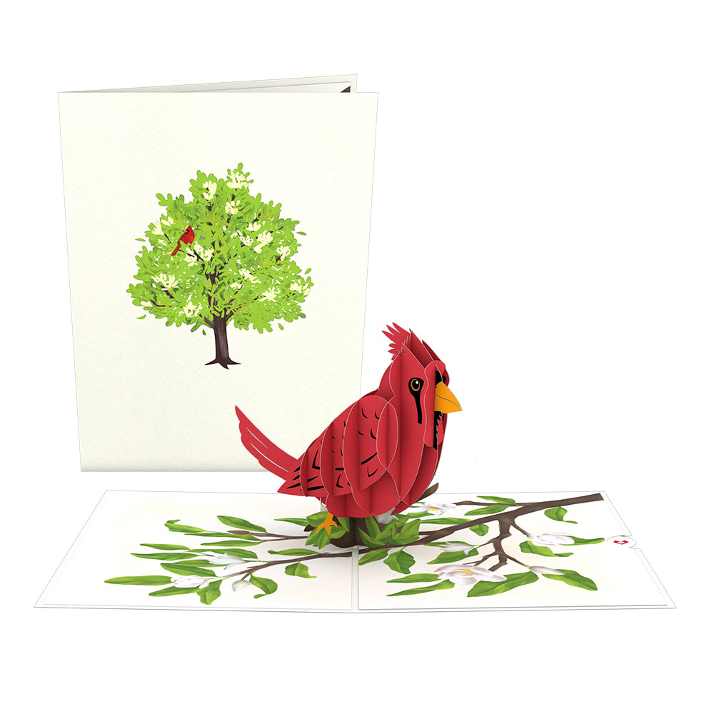 Radiant Cardinal             pop up card