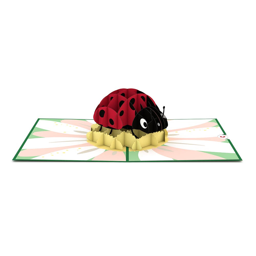 Ladybug birthday pop up card