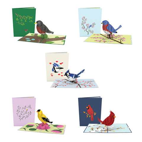 Birds of a Feather 5 Pack greeting card -  Lovepop