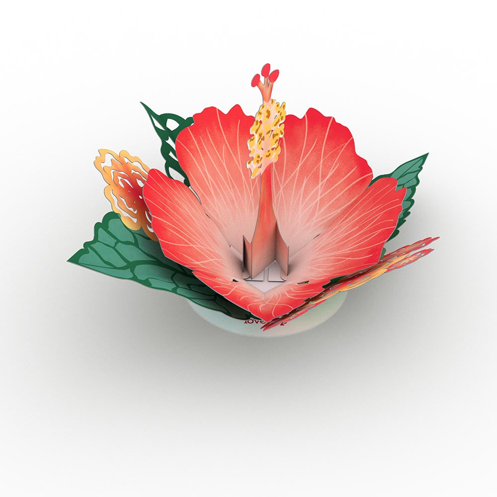 Stickerpop™: Hibiscus Bloom (5-Pack)             pop up card