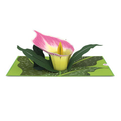 Pink Calla Lily greeting card -  Lovepop