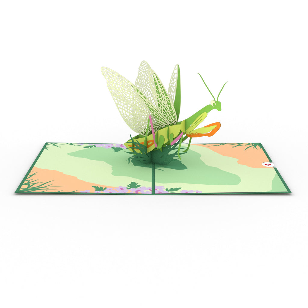 Praying Mantis pop up card