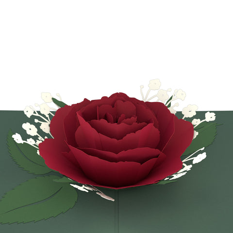 Red Rose Bloom greeting card -  Lovepop