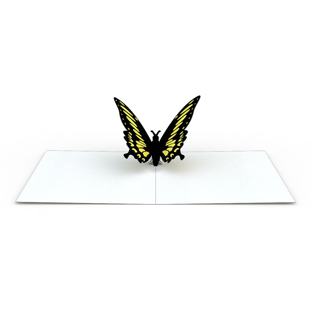 Notecard 4-Pack: Butterfly pop up card