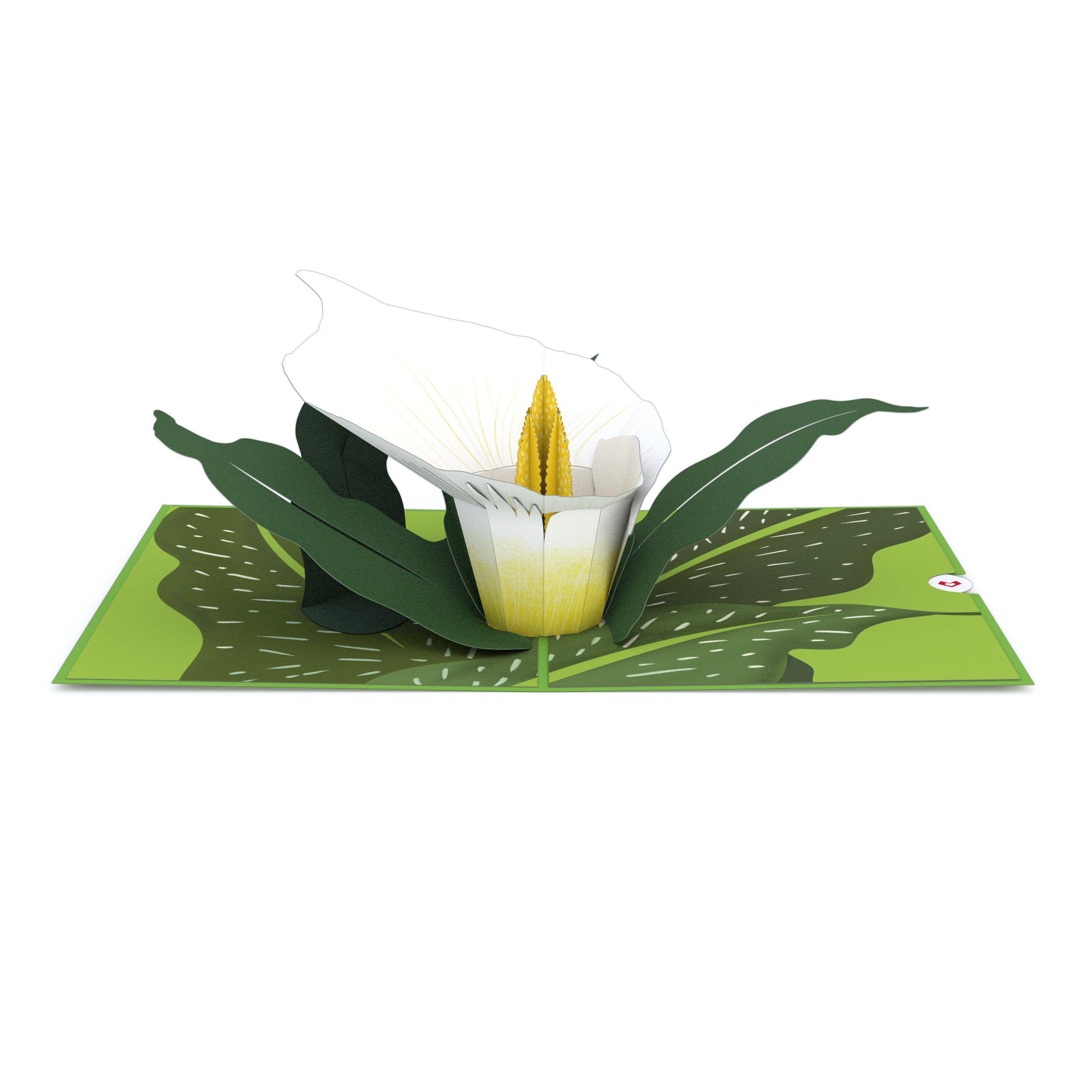 White Calla Lily Pop-Up Card