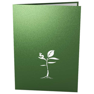 Money Tree Pop Up Birthday Card