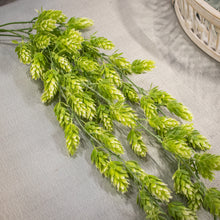 Load image into Gallery viewer, Hops Hanging Bush - Green Cream