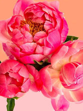 Load image into Gallery viewer, Pink Picasso Paint By Numbers Kit - Petal Power